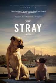 stray 3