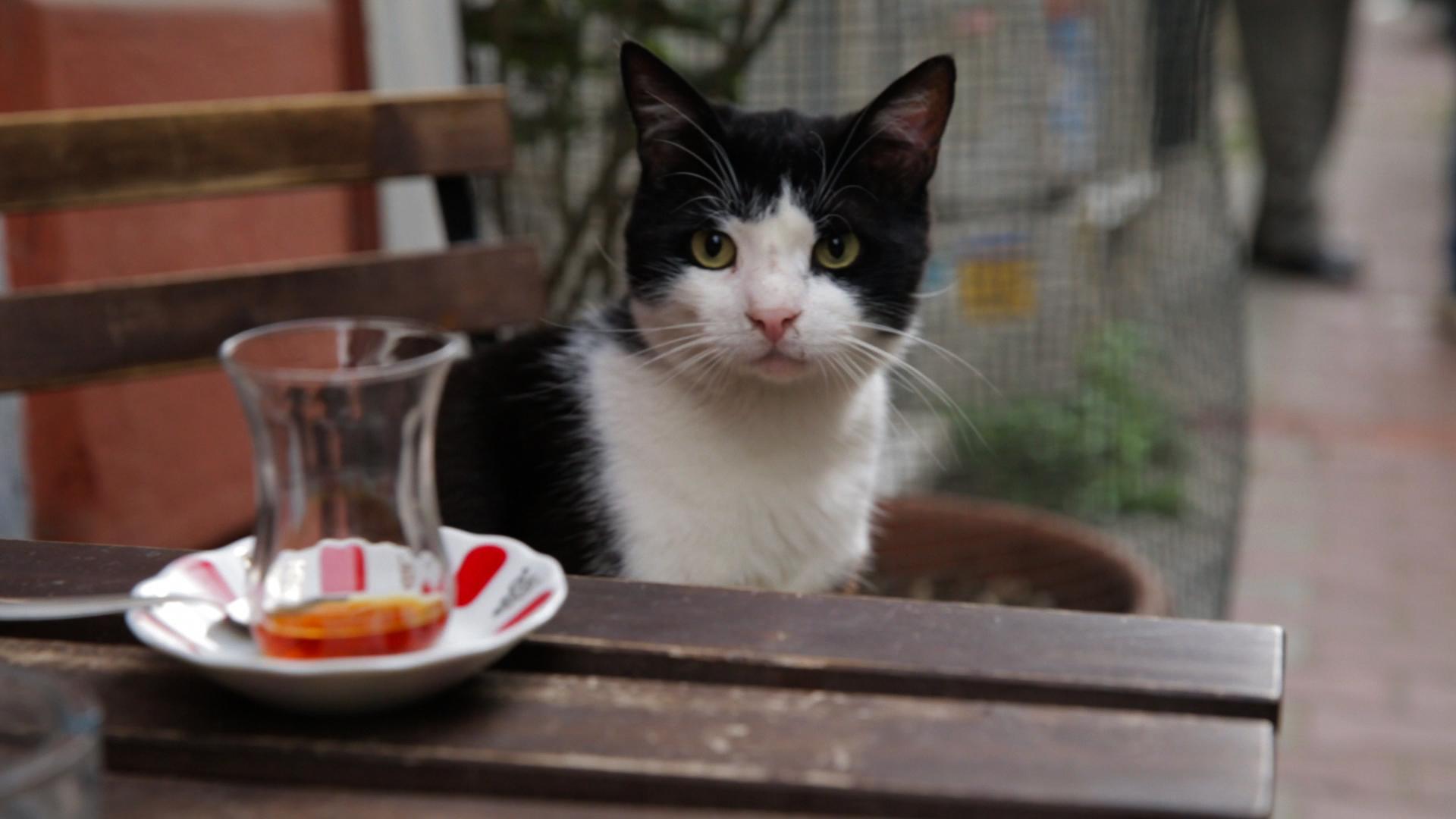 Un gato para todos